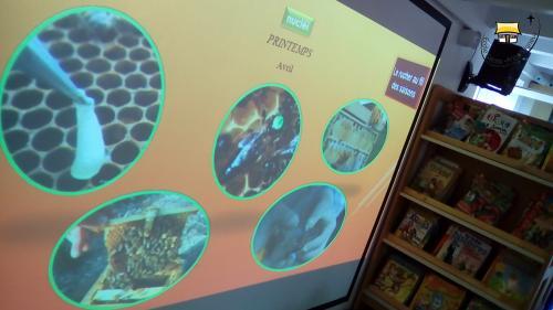 Intervention d'un apiculteur pour les MS GS et CP